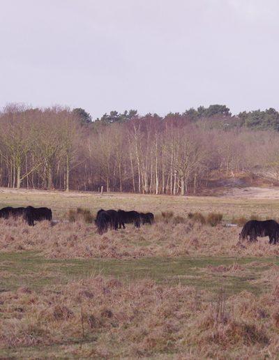 Oranjezon-Oostkapelle-Vrouwenpolder-Landgoed-Twistvliet-Zeeland16285705598_d279ad3bde_k